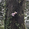 春の野間と桜吹雪