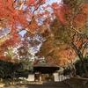 もみじ寺「安楽寺」の参道の石段を染める紅葉