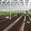 ソーラーシェアリング:サツマイモ・落花生の作付けが進んでいます - 千葉市大木戸アグリ・エナジー1号機