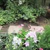 山の庭と、新しい花いろいろ