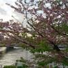 4/24-5/22甘夏書店企画「ikkAまるごとブックマルシェ」開催します~出店紹介