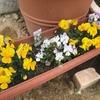 番外編 庭の花の急成長