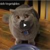 野菜を食べ残してしまったところを見つかったネコのリアクション