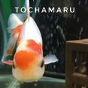 tochamaruのブログ