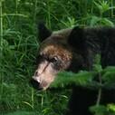 熊さんの写真
