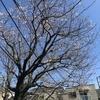 清風楼@横浜中華街・2020年3月20日
