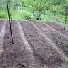一年草野菜の、春の収穫