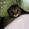 猫動画で、猫体験!