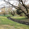 地図子、仙川を歩く -3 水源の森から真の水源まで-