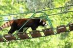 旭山動物園も夏真っ盛り! 暑さのなかで過ごす動物たち。