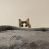 お風呂嫌い再び!?!我が家のお猫様ひま日記15