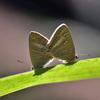 🐝小石川後楽園で昆虫撮影しました🦋