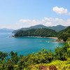 三重県で南方系樹木の北限地帯を見る