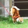 2足歩行の練習