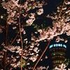 ポートタワーと桜とメリケンパーク