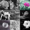 Twitter、アメブロ、Instagram、Facebookに作家「 沖野生海」さんの詩をご紹介しました。