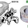 【解剖・生理学】脊柱(頚椎、胸椎、腰椎、仙尾骨)の構造(生理的湾曲、ルシュカ関節など)