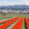 あさひ舟川「春の四重奏」(前編)