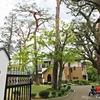 【多摩散歩】三鷹市山本有三記念館に行ってみた