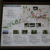 【登山】白谷雲水峡(屋久島)