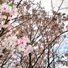 特養月華苑 「菜の花棟4月ブログ」