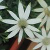 心魅かれた花