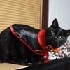 憑いてくる黒猫