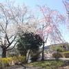 磯部桜川公園20180330