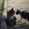 今日の野良猫撮影18