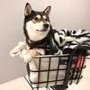 柴犬も余裕で乗れる!ペット乗せ電動アシスト自転車をゲット!