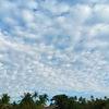 昨日の羊雲!