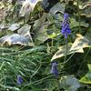 季節を彩る花