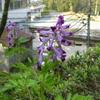 春の野花 (その3)