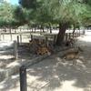 奈良の鹿は神の使い 古都奈良を訪問