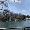 「不適応者の公園散歩」に行ってきました(2020年3月21日(土))