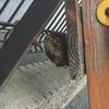浜松市でアシナガバチの蜂の巣を駆除してきました!