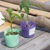 植付け(ミニトマト、ピーマン)、種まき(バジル、紫蘇、ほうれん草、大根)
