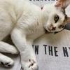 【臆病な猫】日々の生活と私の体験談⑰!!