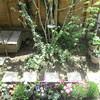 静かで にぎやかな 春の庭