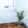 自宅に枝物を飾るとツウぶれる?!大事なのは知識よりもまず買ってみる勇気!