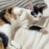 猫は頭が良い(柚子知恵をつける)