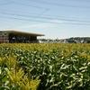 遠州森町の鈴木農園で大行列に並んでトウモロコシ「甘々娘(かんかんむすめ)・森の甘太郎」を購入!