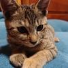 ネコが我が家にやってき来た! 名前は「ひめ」まさしく「お姫様」待遇