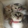 我が家の猫さん⑤パチョレック&セシル&タイガ。