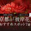 初秋の田畑を真っ赤に染め上げる京都の「彼岸花」おすすめスポット7選