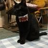 【生活】ネコちゃんにデザインカラーを買ってあげました