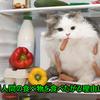 猫が人間の食べ物を食べたがる!大丈夫?