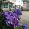 紫陽花の長井市、ベーグル屋さん、フラワー長井線、古峯神社