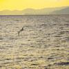 3回目の大島渡航ラスト