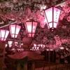 夜桜の土佐稲荷神社と花見  2018年桜-3  300326